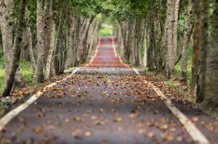 Umweltfreundlich Autofahren: Allee mit hohen Bäumen