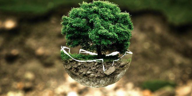 Umweltschutz, symbolisiert anhand eines Baumes in Miniatur. Runderneuerte Reifen sind ein Beitrag zum Umweltschutz.